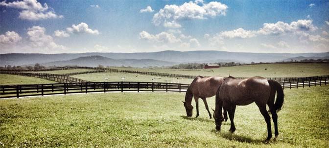 Horse Retirement in Virginia