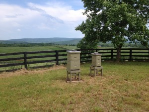 First of many Long Branch hives