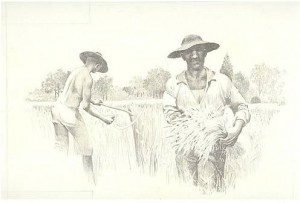 Slaves, one using a hand sickle and harvest stick, harvesting and gathering grain. Image courtesy of the National Park Service.