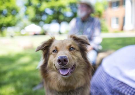 Pet Day at Long Branch